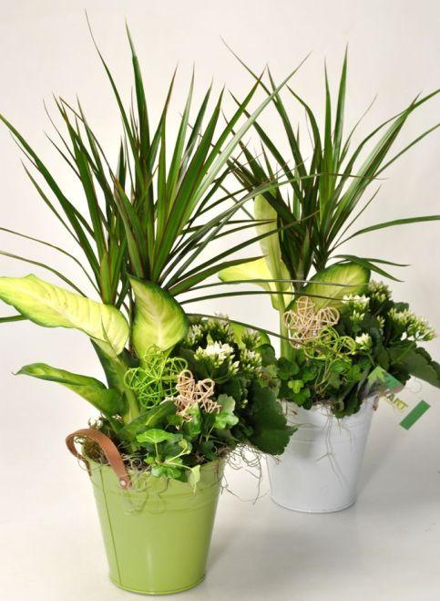 Mix Indoor Plants 3