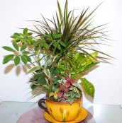 Mix Indoor Plants 4